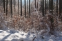 Winterwald am Crux . Oberes Vessertal (Foto: Andreas Kuhrt 2016)