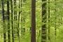 Wald bei Vesser (Foto: Andreas Kuhrt 2017)