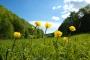 Trollblumen im Vessertal (Foto: KatrinS83, Creative Commons)